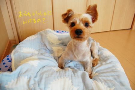 DSC_0004_convert_20110919060606.jpg