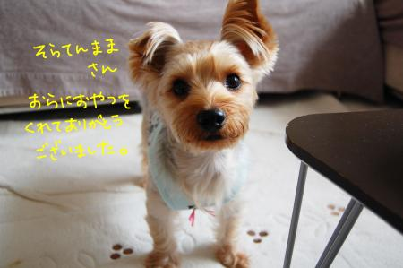 DSC_0004_convert_20111120103455.jpg
