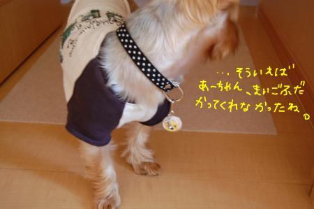 DSC_0006_convert_20110926221521.jpg