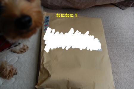 DSC_0006_convert_20111018234805.jpg