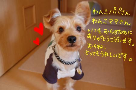 DSC_0009_convert_20110926221541.jpg