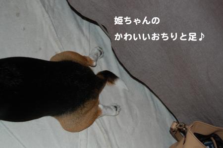 DSC_0010_convert_20111024192804.jpg