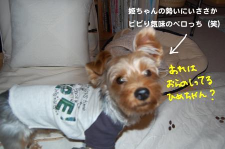 DSC_0012_convert_20111024192843.jpg