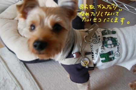 DSC_0015_convert_20110926221600.jpg