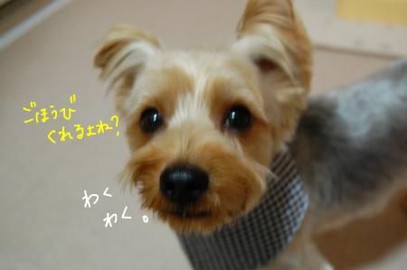 DSC_0015_convert_20111101115736.jpg
