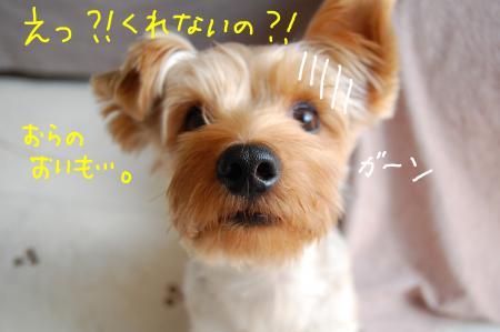 DSC_0019_convert_20111026000122.jpg
