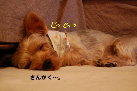 DSC_0026_convert_20111013102403.jpg