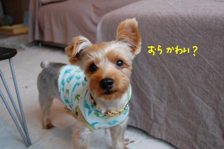 DSC_0034_convert_20111007221311.jpg