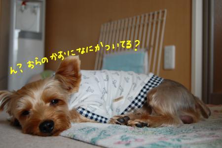 DSC_0034_convert_20111013102423.jpg