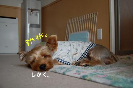 DSC_0036_convert_20111013102443.jpg