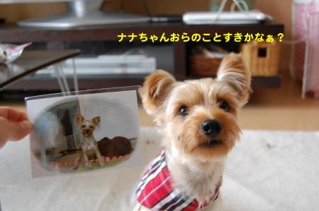 DSC_0045_convert_20111018235113.jpg