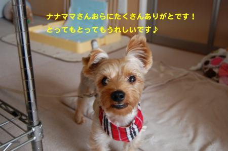 DSC_0046_convert_20111018235149.jpg
