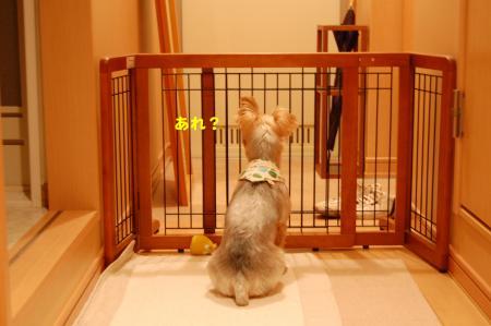 DSC_0073_convert_20111016223342.jpg