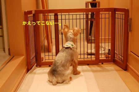 DSC_0074_convert_20111016223401.jpg
