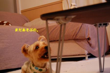 DSC_0082_convert_20111018235235.jpg