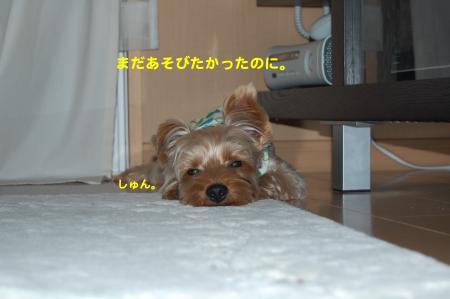 DSC_0096_convert_20111018235301.jpg
