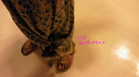 NEC_0164_convert_20110915165749.jpg
