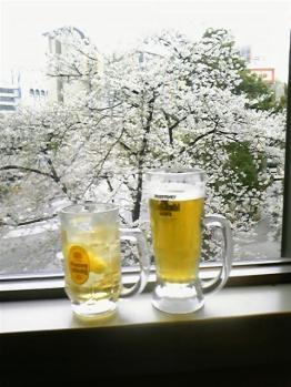 桜とジョッキと・・・おしゃべりと・・・
