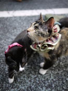 ネコしゃん