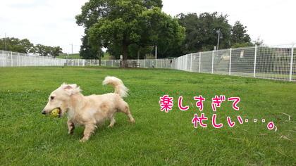 2014-09-14-4.jpg