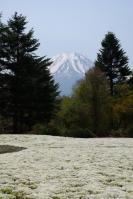 芝桜まつり2