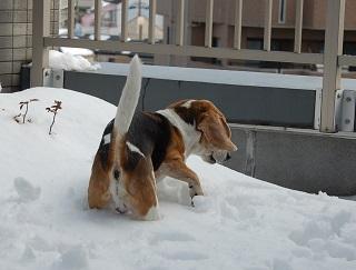 spike雪02