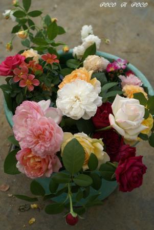 皆さんのお花2