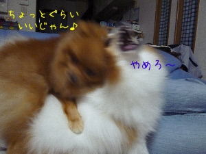 LVknM.jpg