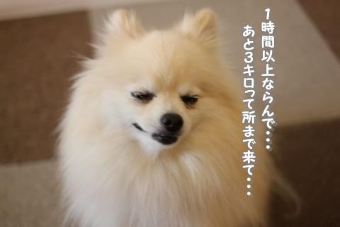 IMG_770a8.jpg