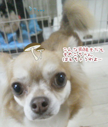 NEC_0006_20130722192822.jpg