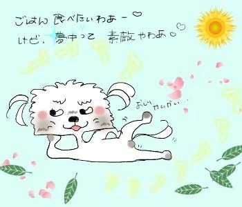 ポンちゃん4
