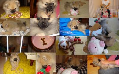 2011-12-04_convert_20111229233523.jpg