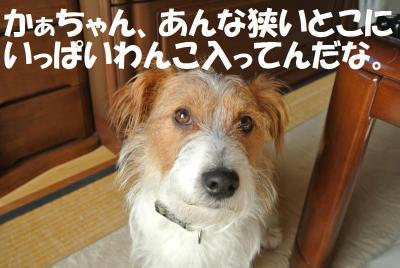 036_convert_20130208142651.jpg