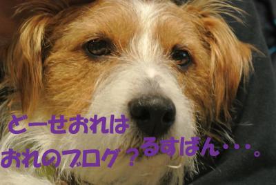 062_convert_20130131150725.jpg