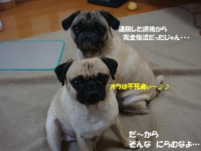 DSC00574_20110906202048.jpg