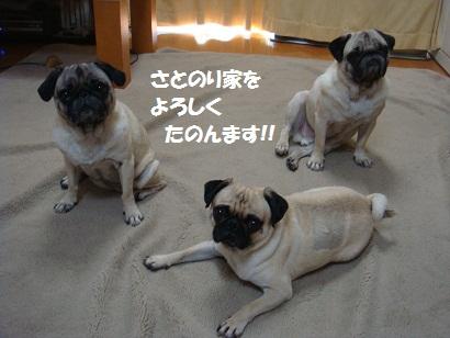 DSC00580_20110906202513.jpg