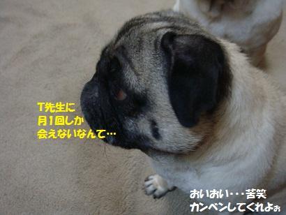 DSC00609_20110906203618.jpg
