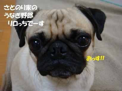 DSC00620_20110906202049.jpg