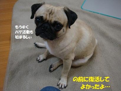 DSC00621_20110906202048.jpg