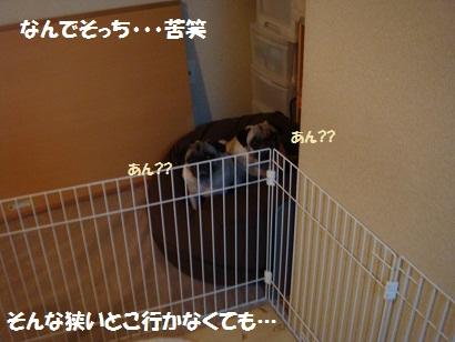 DSC02991_20111020031850.jpg
