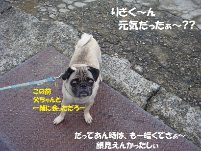 DSC03041_20111024204946.jpg