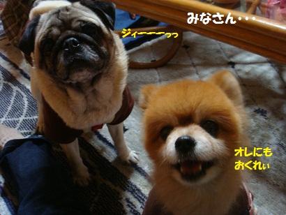 DSC03263_20110906194528.jpg