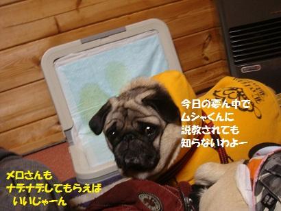 DSC03332_20110906205229.jpg