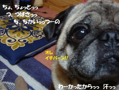 DSC03336_20110906194528.jpg