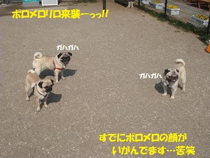 DSC03690_20110913023825.jpg