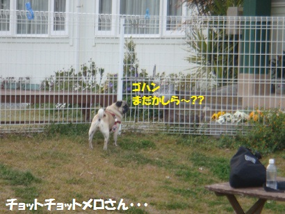 DSC03719_20110913202943.jpg