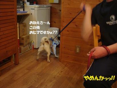 DSC03861_20110914022801.jpg