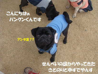 DSC04007_20110929005539.jpg