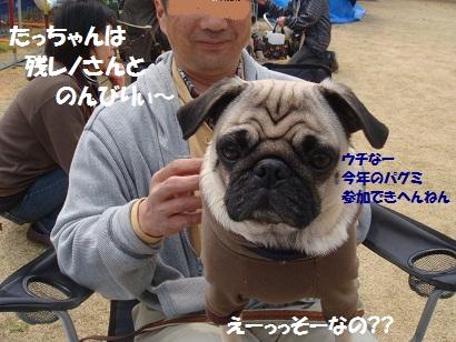 DSC04091_20111002125807.jpg