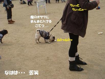 DSC04178.jpg